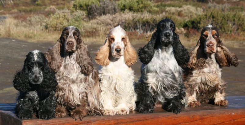 List of dog breeds recognized by the FCI - Wikipedia